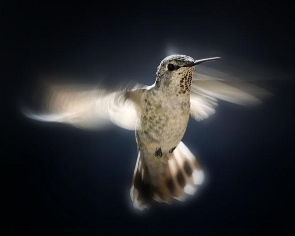 Silver Wings by Michael Ekern