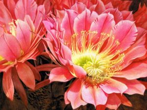 Tucson Flower - Linda Heath Clark - FAA Demo Jan 2019