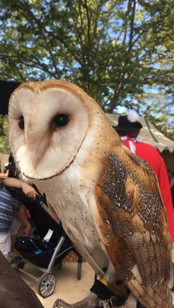 Owl at the Folsom Renaissance Faire by Elliott Rogin
